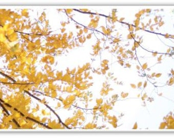 iPhone Case , Fine Art Photography, Yellow Fall Leaves, iPhone 4/4s , iPhone 5/5s, iPhone 5c, iPhone 6, Tree Branches