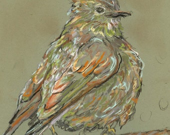 solitaire - 8X10 bird print