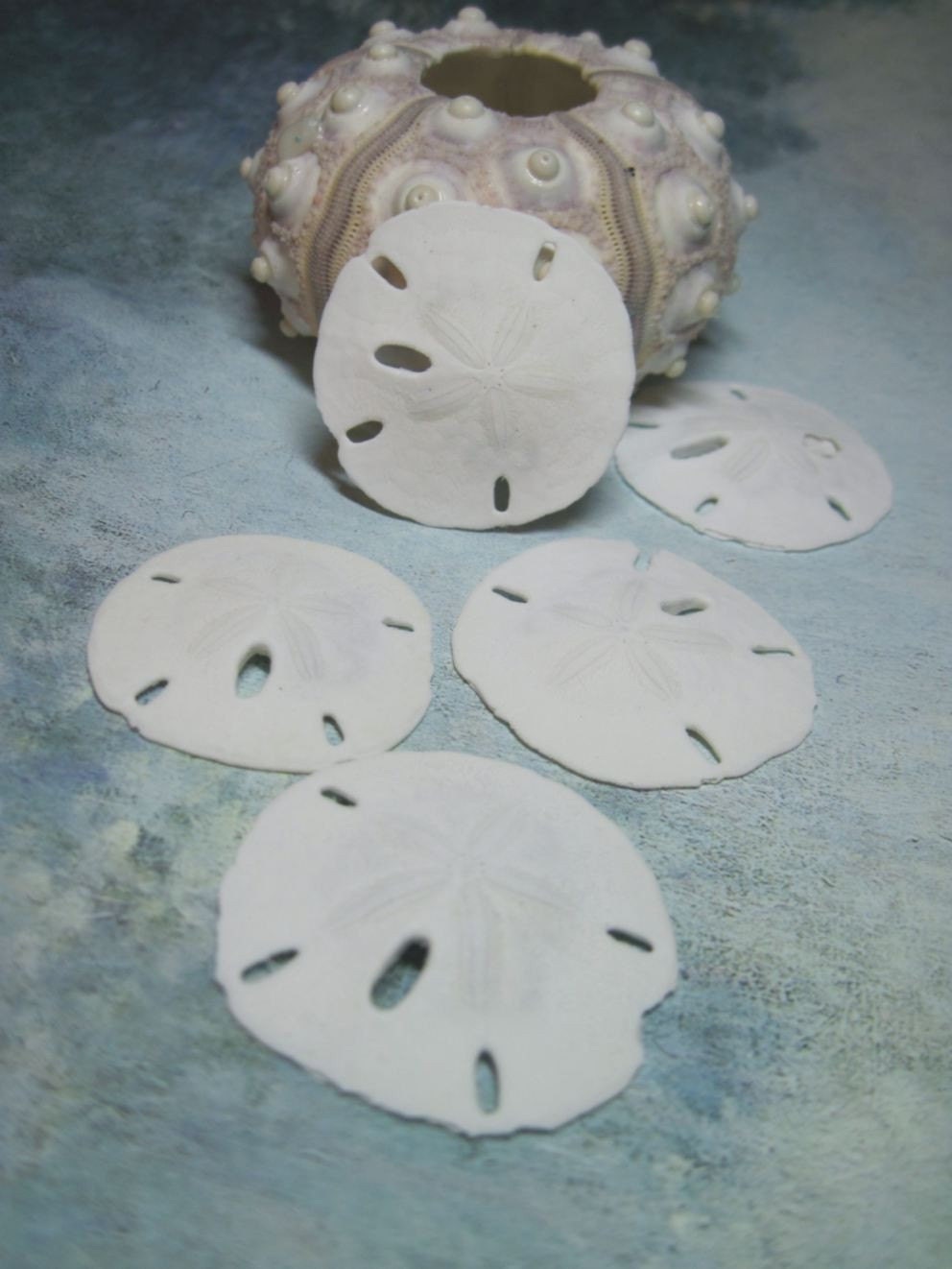 Beach Sand Dollars 1 3/4 inch Sandollars or Beach Wedding