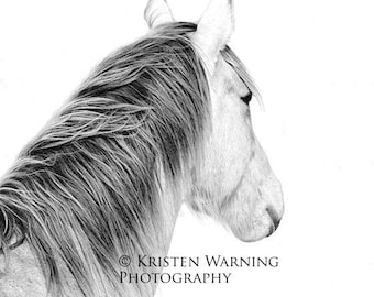Looking Forward, Black and White Photography, Horse Pictures, Horses, Equine Art, Fine Art, Portraits
