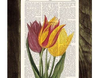 Vintage Tulips Dictionary or Encyclopedia Page Print Book print Tulip botanical studio print on Book BFL064