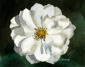Flower Painting, Original Watercolor Painting, Blooming White Rose, Flower, Fine Art, Nature, Realistic, White, Rose