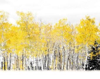 Aspen tree fall photo, pine tree wall art, Colorado art, fall decor, log cabin art, aspen tree snow photo, Colorado photography | Lone Pine