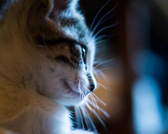 Cat Photography, Animal Photography, Kitten Photography, Portrait Photography, Wildlife Photography, Wall Art, Fine Art Photography