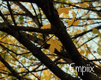 Yellow Autumn Leaves WallArt Photograph (A3,A4,A5)  by Empiix