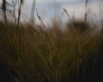 Elle Lawson Photography - Lustre Print - Dusk
