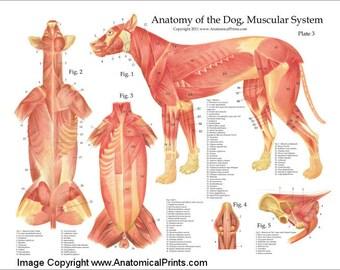 Anatomy poster | Etsy