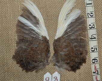 Real Quail Wing - cat toy, decoration, craft material, vintage hat accessory, natural brown and white