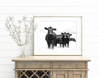 Black and White Sky Cattle Photograph, Farm Photo, Cattle and White, Country Photography, Physical Cow Print