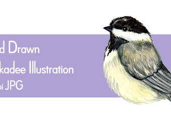 Chickadee clip art, chickadee illustration printable PDF, JPG bird clip art, instant download bird clip art