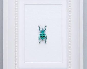 Turquoise Weevil Beetle