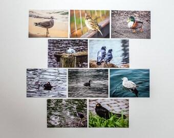"""Postcards set """"Birds"""", 10 different pictures per set"""