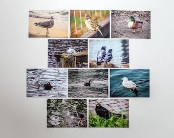 "Postkartenset ""Vögel"", 10 verschiedene Motive pro Set"
