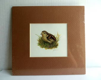 Vintage Print of a Baby Bird Matted Room Decor