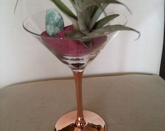 Martini glass with Air Plant