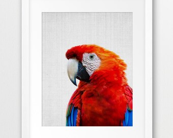 Parrot Print, Red Macaw Parrot Print, Exotic Bird Print, Tropical Wall Decor, Color Photography, Nursery Wall Art, Kids Room, Printable Art