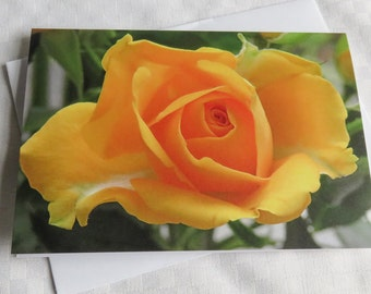Rose Card, Greetings Card, Blank Card, Nature Photography Card, Yellow Rose, Flower Card, Flower photography