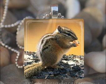 CHIPMUNK CUTIE Squirrel Nut Autumn Fall Glass Tile Pendant Necklace Keyring