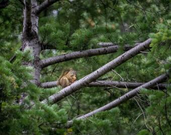 Squirrel Fine Art Photography Print