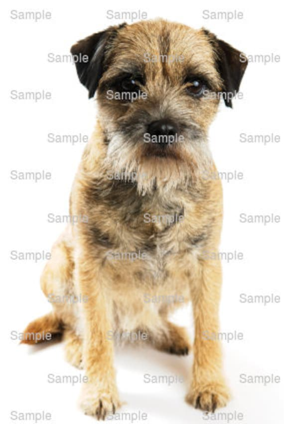 Border Terrier Dog Birthday - Edible Cake and Cupcake Topper For Birthday's and Parties! - D4970