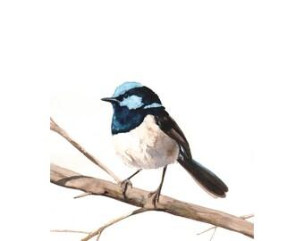 Fairy Wren Bird Art Archival print of watercolor painting 5 by 7 size print wall art print - bird art print