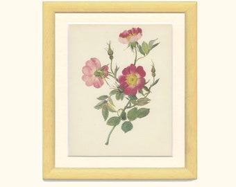 Vintage Red Rose Print, Parkfeuer, Flower, Botanical Print, Natural History, 1966/47, Country Cottage Decor, Frameable Mother's Day Gift