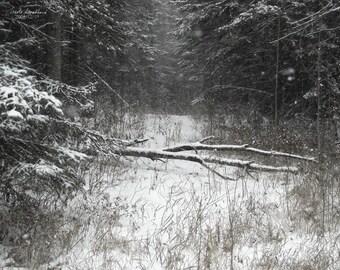 Snowflakes Tread Softly
