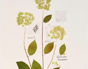 Herbarium of dried natural flowers