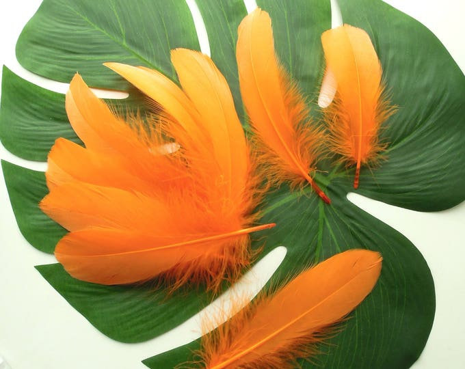 10 Orange quill feathers, Tangerine orange feathers, Real feathers bright orange, Goose feathers, Bright orange craft feathers