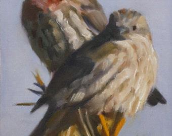 Bird art - lovebirds - finch • oil painting - original painting - Pamela Poll