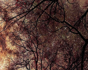 Starry Sky, Nature Photography, Brown, Copper Gold, Surreal, Trees, Fine Art Print, Large Wall Art, Night Sky