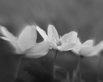 Home sweet home, Black and white photo, botanical art, floral Photography , Flower Photography, Gift