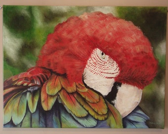 Large Macaw Parrot Painting in Water Based Oil Paints on Canvas by Suzie Nichols