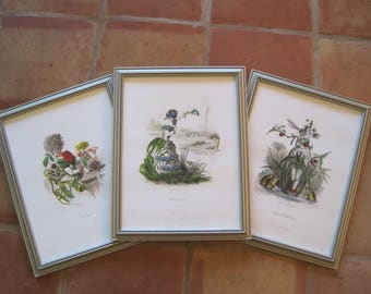 "Set of 3 Prints from Les Fleurs Animees by French Artist J.J. Grandville  Enlarged and Framed Repros 17""x13"" Dahlia Myosotis Fleche-D-Eau"