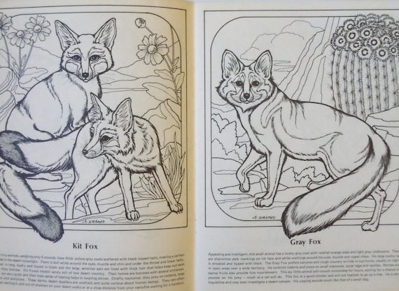 Line Drawing Of Desert Animals : Desert wildlife of the southwest a coloring album by rita