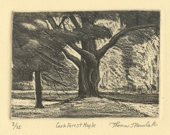 COOK FOREST MAPLE original hand printed zinc plate aquatint etching