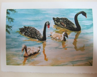 Black Swans 5 x 7 Note card Watercolor print Swans Lakeland Florida Cygnets watercolorsnmore Black