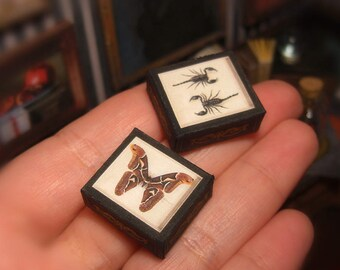 Miniature SHADOW BOX Set . Giant butterfly and scorpions . Dollhouse Miniature . DOWNLOAD . Shadow box . Scale 1:12