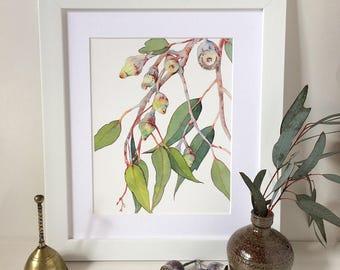 Eucalyptus watercolor print A5, 10x8, A4; Australian native flora botanical print; nature wall art print; Australian contemporary art