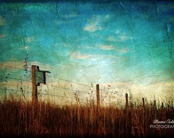 Golden Grass  12x18 Fine Art Photo