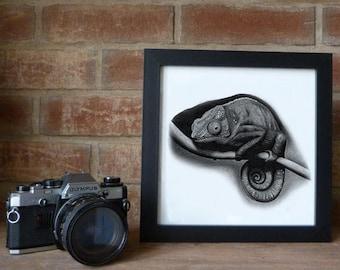 chameleon pencil sketch, animal portrait