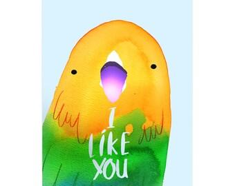 I Like You Budgie A3 Art Print