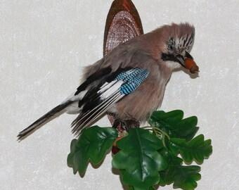 Eurasian Jay - Taxidermy Bird Mount, Stuffed Bird For Sale - ST3811
