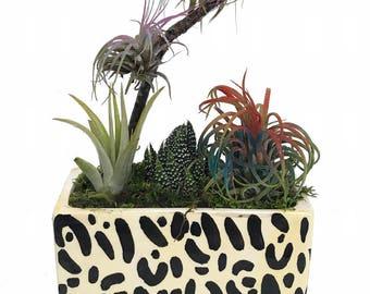 "Leopard Ceramic Rectangle Planter + Living Air Plant - Tillandsia - 5"" x 3"" x 4"""