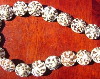 Sea Shell Beads (Conus capitaneus)