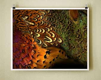 PHEASANT BACK - 8x10 Signed Fine Art Photograph