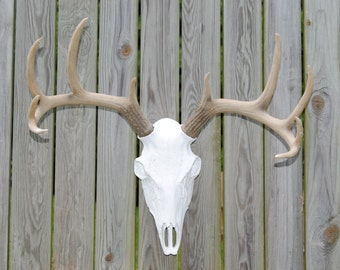 Faux Taxidermy - White Deer Skull - Natural Antlers - Wall Mount BS0100