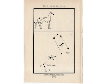 c. 1944 canis major - CONSTELLATION FIGURE PRINT - original vintage astronomy print - star map - celestial lithograph - the dog