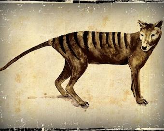 Tasmanian Tiger Thylacine Drawing By Cindy Watkins Photographic print on card. Blank Gift Card.