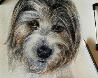 Custom Pet Portrait, Colored Pencil Dog Drawing, Animal Sketch, Pet Memorial Portrait, Dog Lover Gift